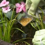 Удобрять цветы
