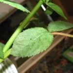 Желтеет листок