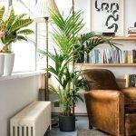 Зеленый уголок в квартире