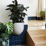 Растения для декора комнаты