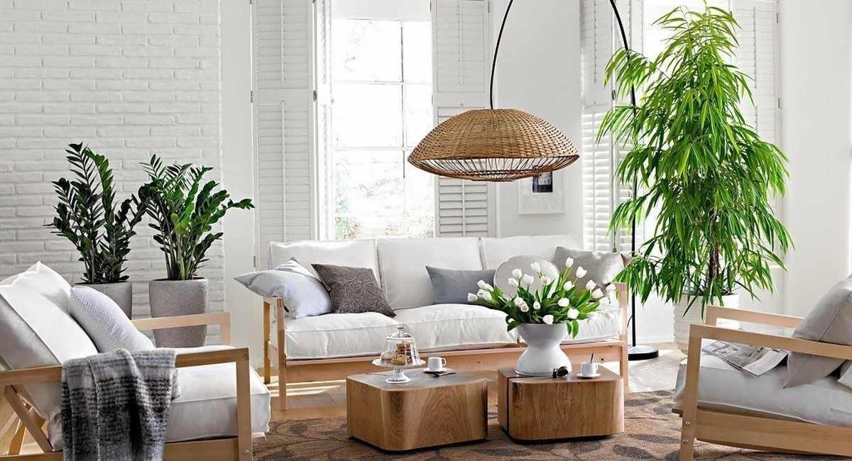 Комнатные растения в гостиной