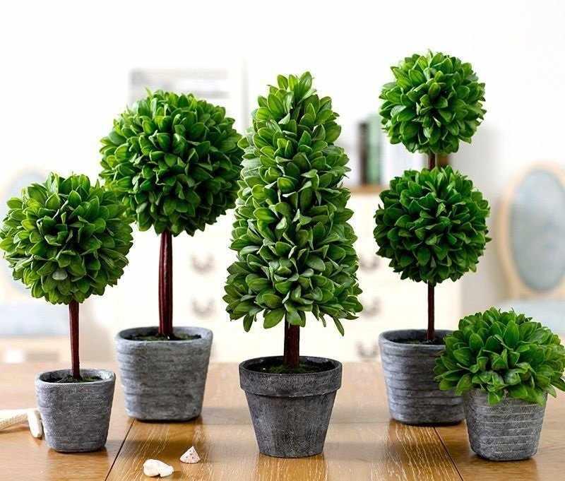 Мини-деревья для декора