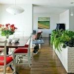 Комнатные растения для зонирования