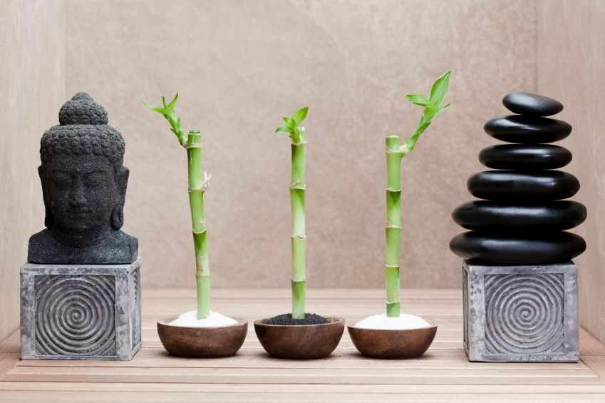 Чашки с бамбуком