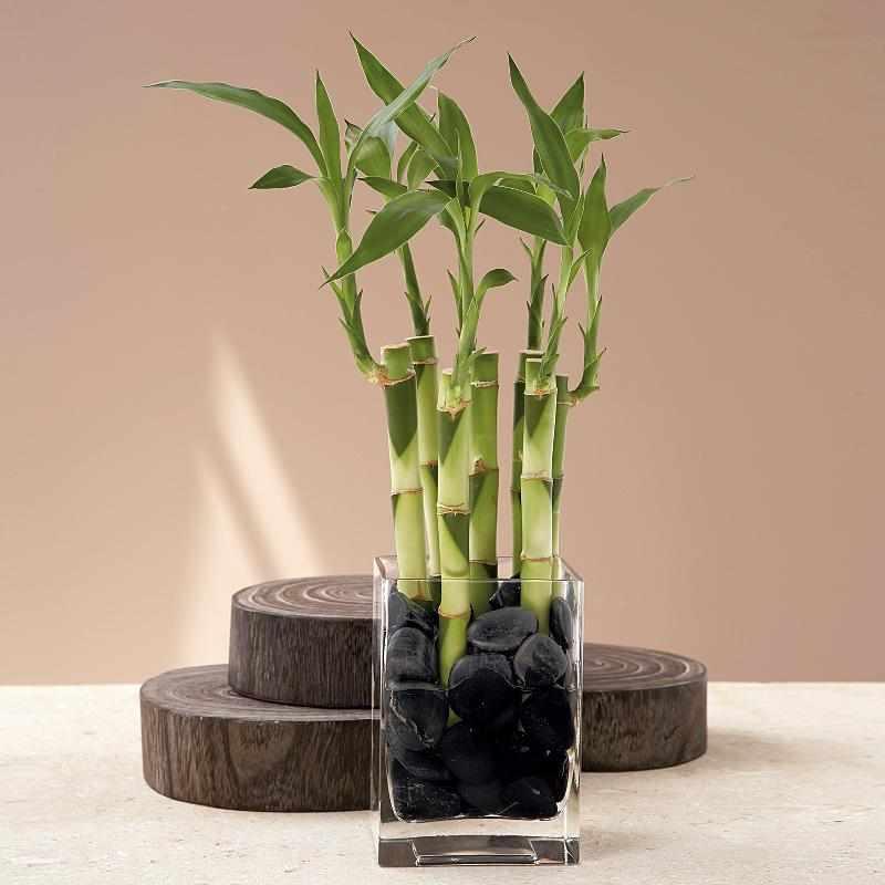 Бамбук в воде