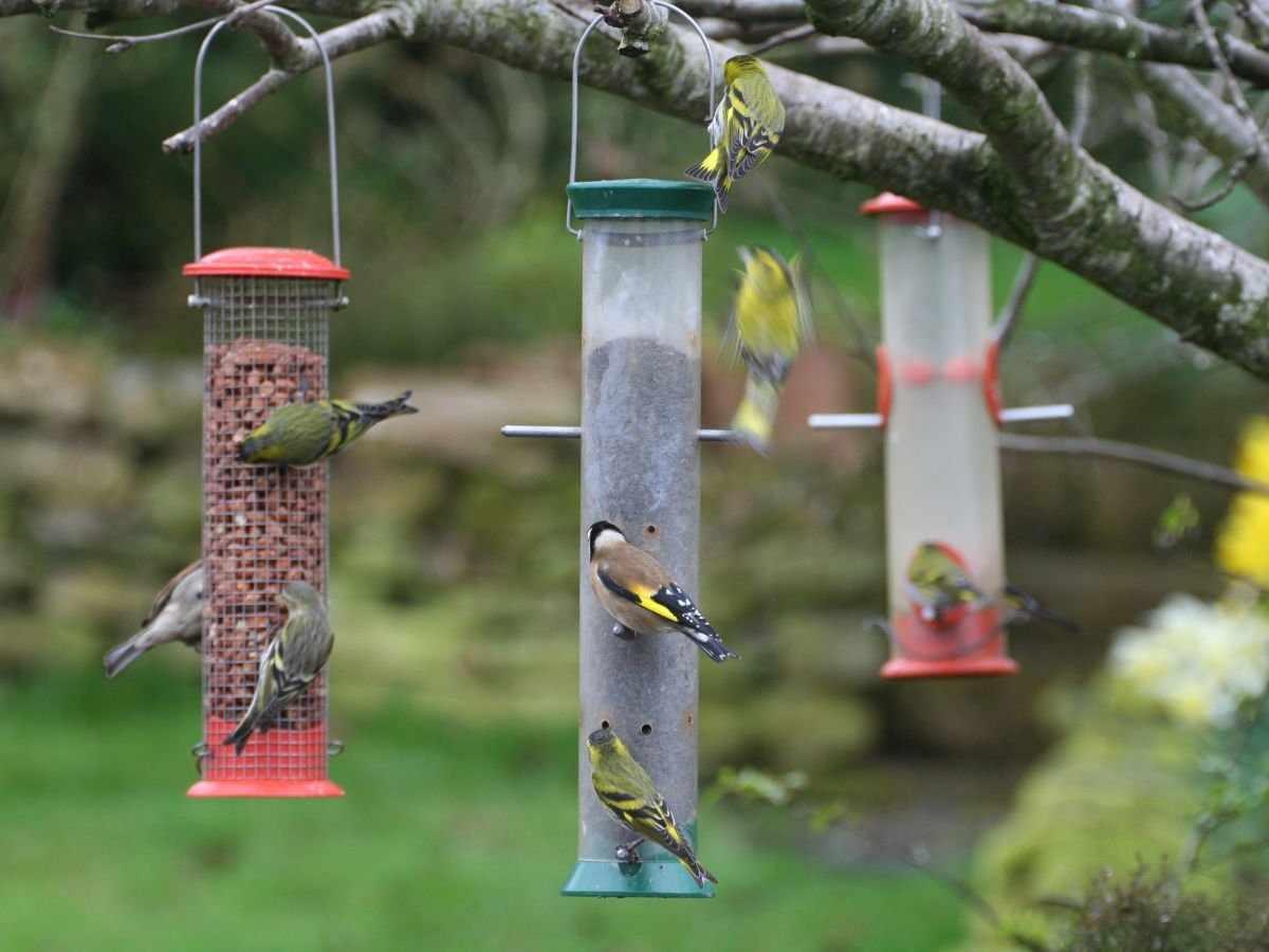 Кормушки для мелких птиц