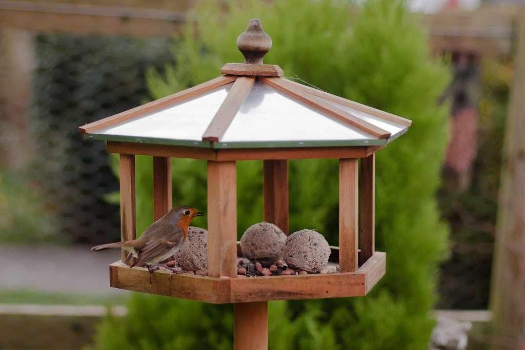 Авторская кормушка для птиц