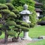Бонсай в саду