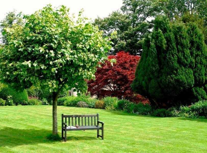 Роскошный сад на участке 15 соток