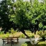 Деревья возле частного дома