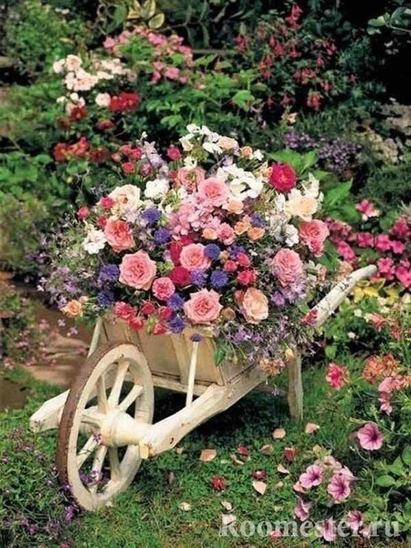 Клумба из роз