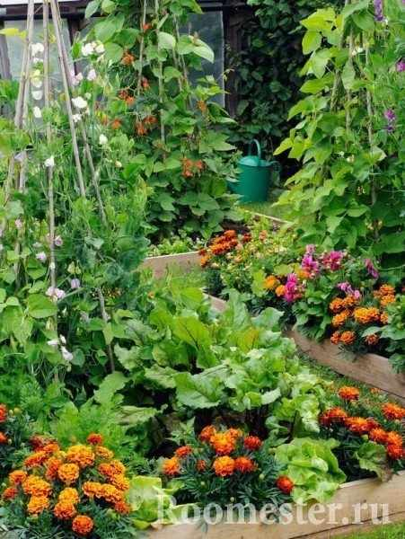 Совмещение растений