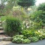 Хосты в саду