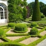 Кустарники в дизайне сада
