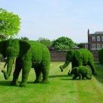 Фигуры слонов из кустарников