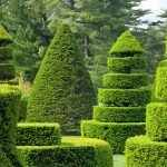 Вариант оформления деревьев с помощью стрижки
