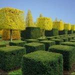 Фигурная стрижка кустарников и деревьев