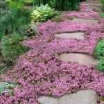 Дорожка с почвопокровными цветами