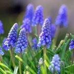 Цветы раннего цветения