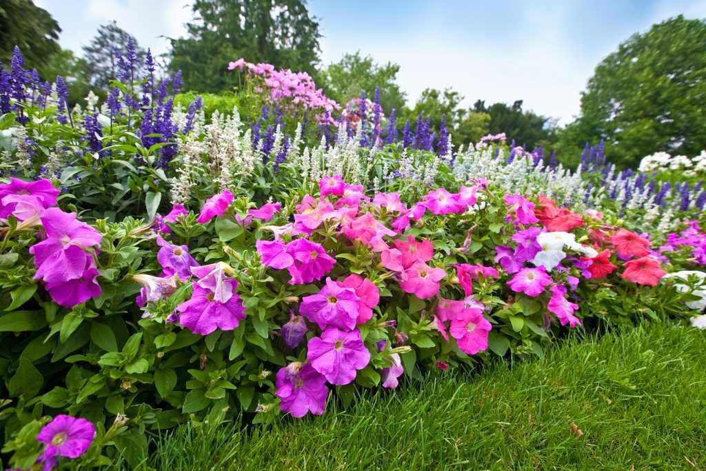 Как выбрать сорт цветочных растений