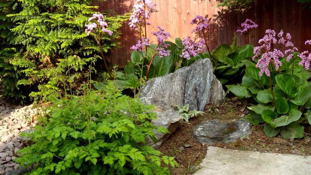 Тенелюбивые растения для дачного участка