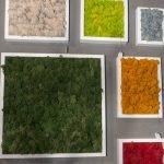 Рамки с разноцветным мхом на стене
