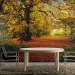 Осенний лес на обоях