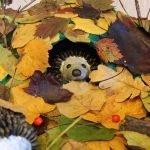 Ежик в листьях