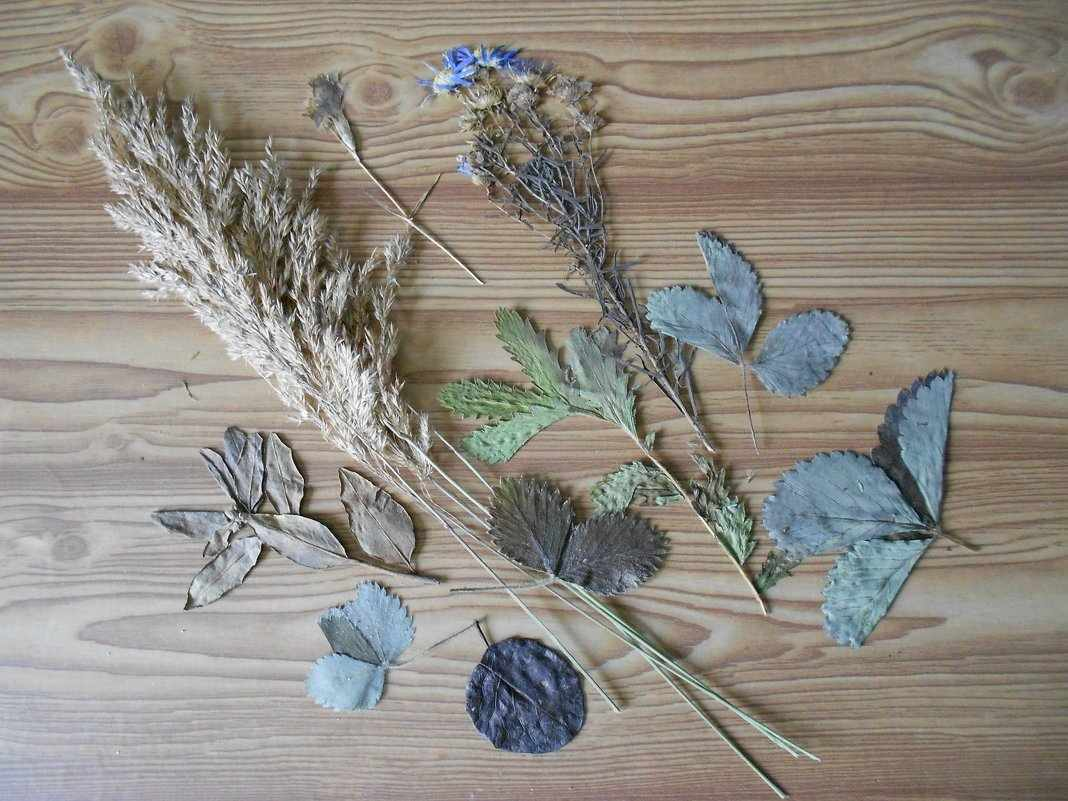 Сушка растений и цветов