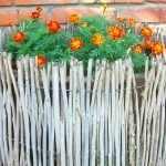 Цветник с бархатцами