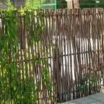 Вьющееся растение на заборе