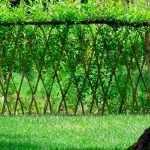 Газон под деревом