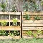 Растения на поддонах