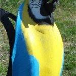 Подвесная клумба-попугай