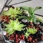 Стиль ботаника в интерьере