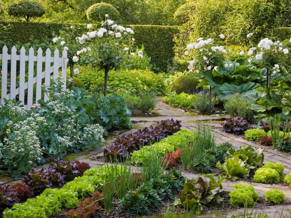 Зона сада и огорода