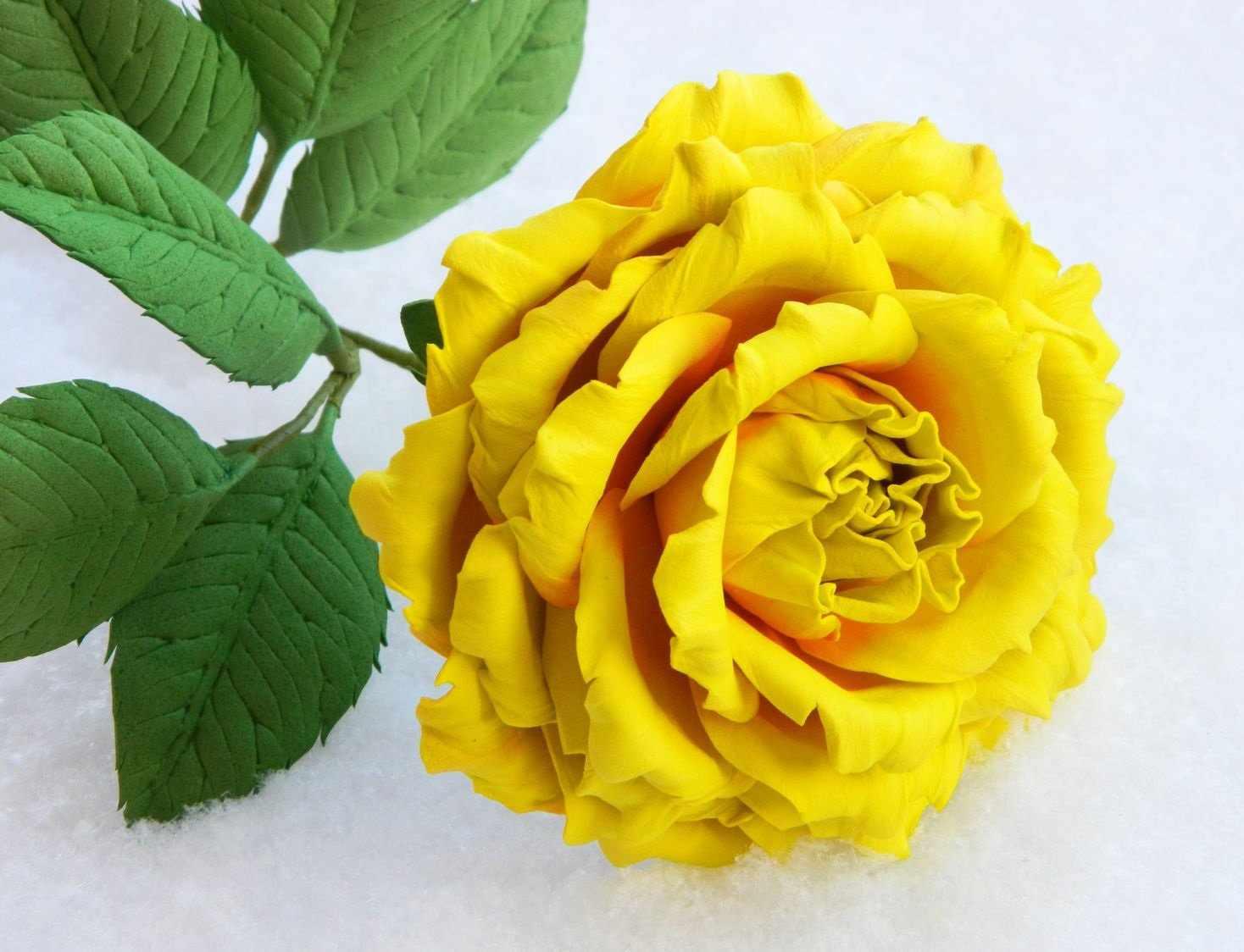 Роза на стебле