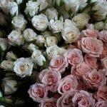 Белые и нежно-розовые розы