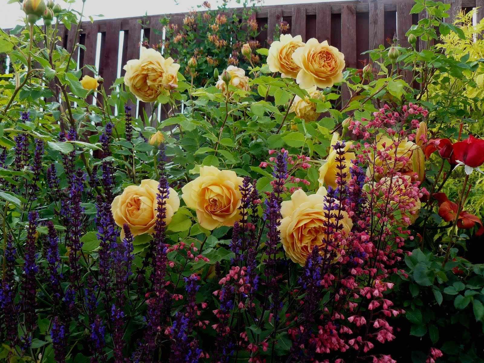 Розы в миксбордере