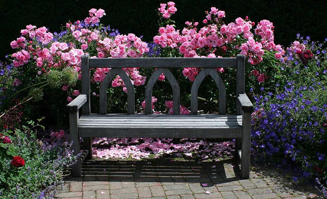Розы за садовой лавочкой