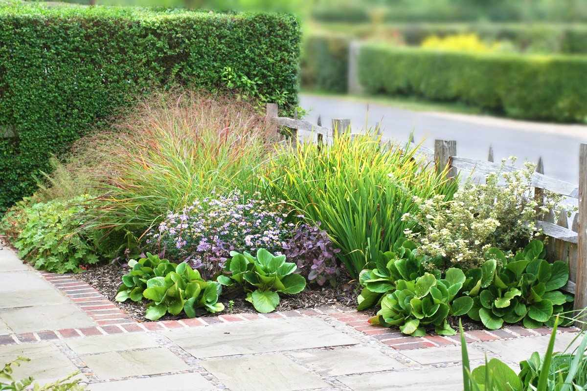 Растения для садовых композиций