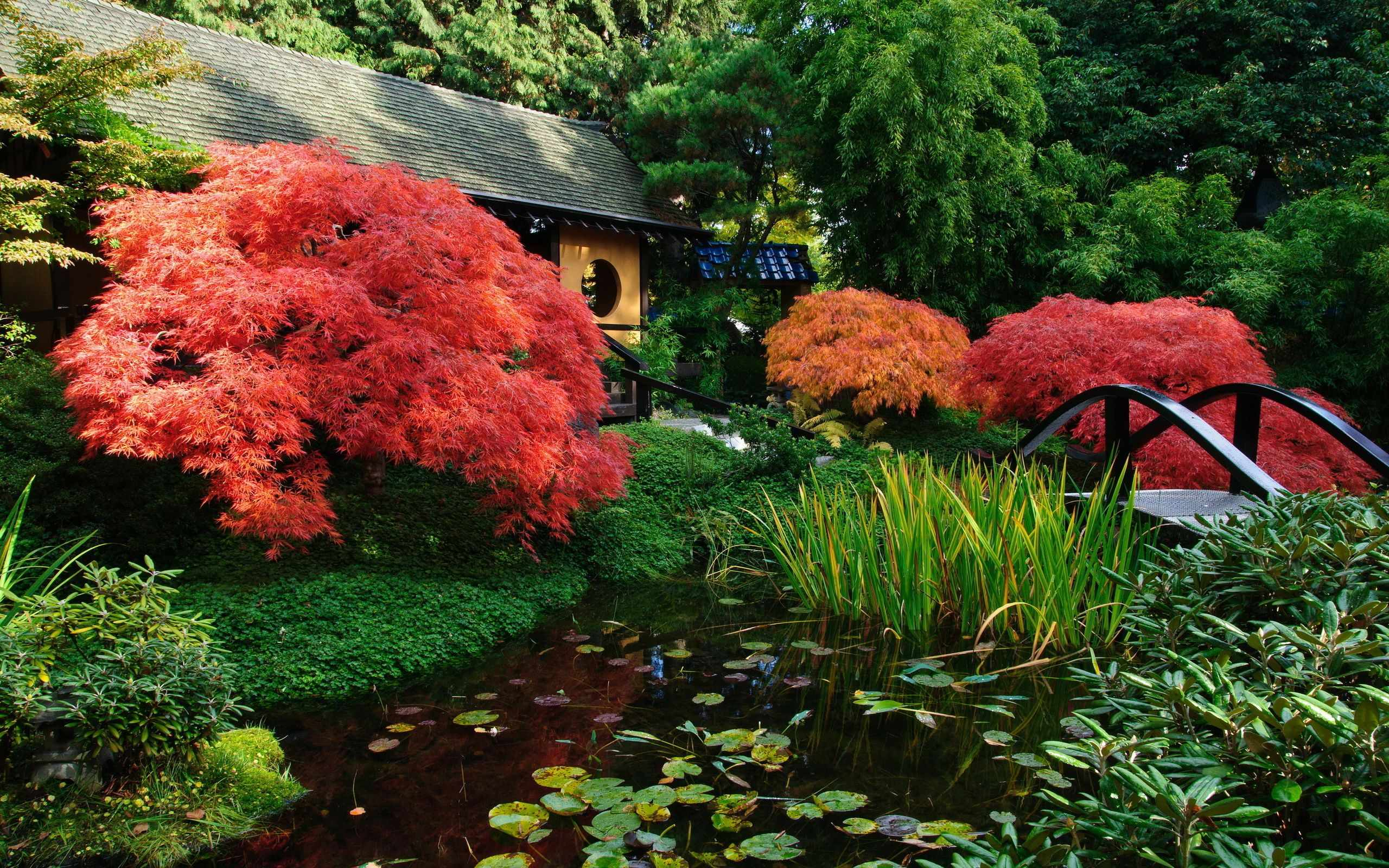 Красные кустарники