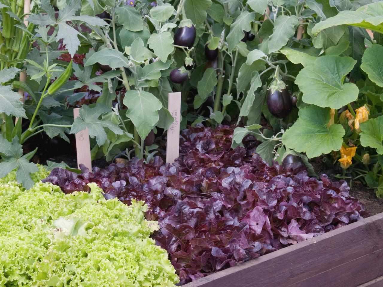 Совместимость культур на огороде