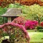 Яркие кусты перед домиком