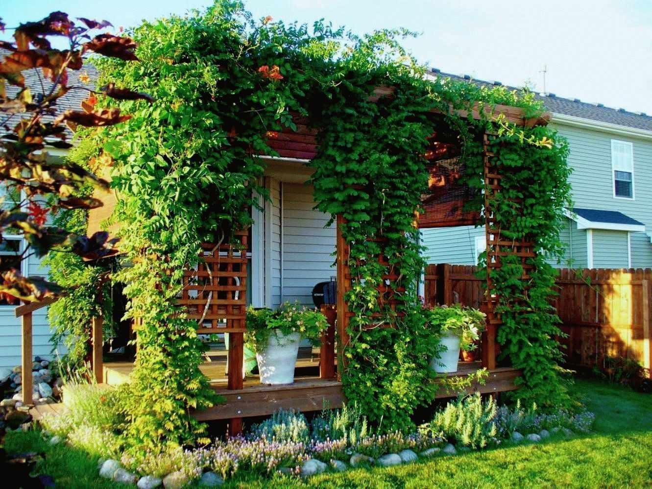 Озеленение веранды