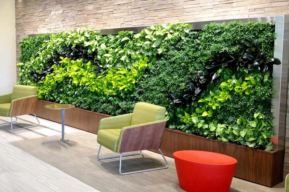Преимущества растений