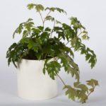 Растение в вазоне