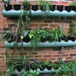 Растения в трубе