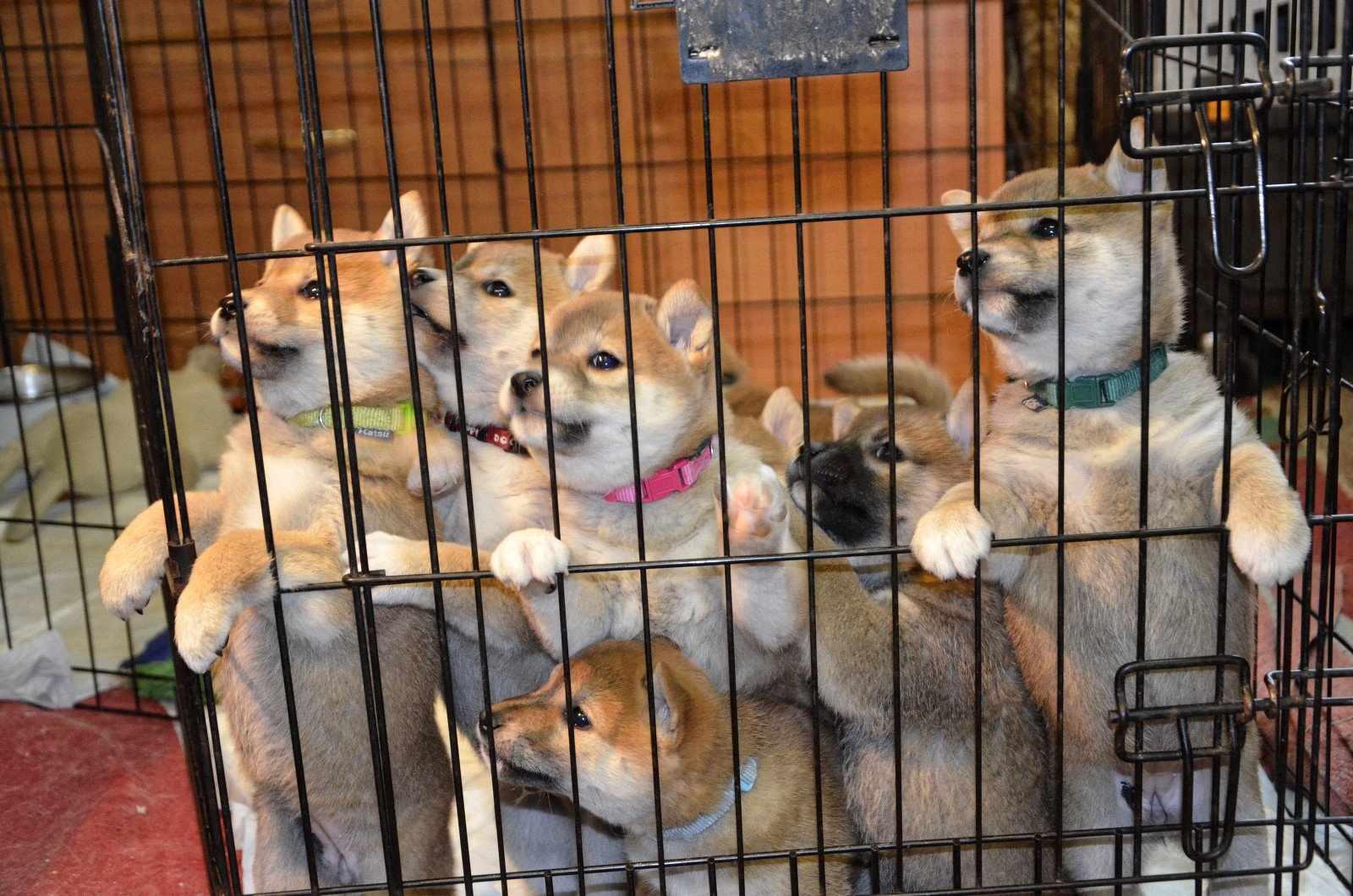 Вольер со щенками