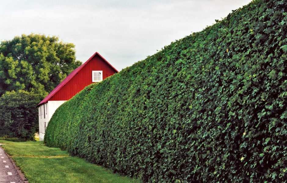 Дом за живой изгородью